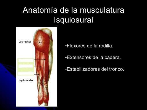 Imagen de los músculos traseros de la pierna